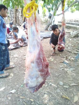 Kaki sapi setelah di sembelih Hari Raya Qurban