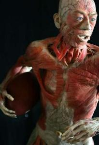 https://buhankadege.files.wordpress.com/2012/03/the-amazing-human-body-exhibition1.jpg?w=205